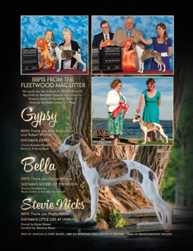 We are so proud of our last litter! Sired by CH Sporting Field Rocks At Shetara, Sly and dam CH Dragonsong's Willow See our ad in the September issue of Canadian Dog Fancier!