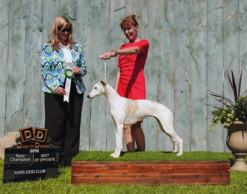 TRINTY CH Shetara's Trinity became a new champion in the summer of 2015. Thank you judge Avery Gaudin