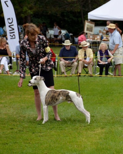 BEST IN BRACE CANADIAN NATIONAL WHIPPET CLUB 2015 CH Shetara's Harvest Moon CRN CL CRNT, GCH Shetara's Chasing The Wind CRN CL CRNT and me! Thank you Nancy for having me to handle them.