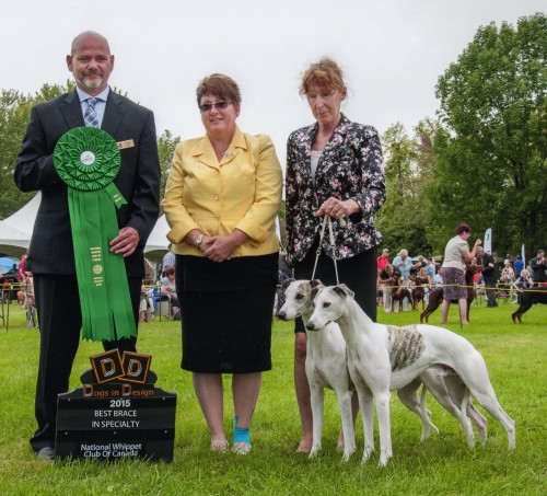 THE NATIONAL WHIPPET CLUB OF CANADA BEST IN BRACE for CH Shetara's Harvest Moon CRN CL CRNT, Neil and his son GCH Shetara's Chasing The Wind CRN CL CRNT and I. Thank you Nancy Davie for having me handle them and thank you to breeder/Judge Raymond Yurick