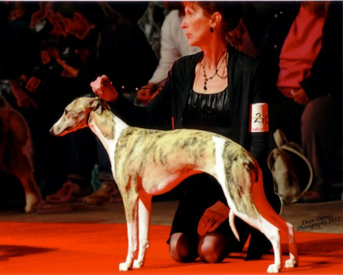 Eukanuba 100 Best off the Best. Just 1/2 year old and we qualified. I was so proud to be there.